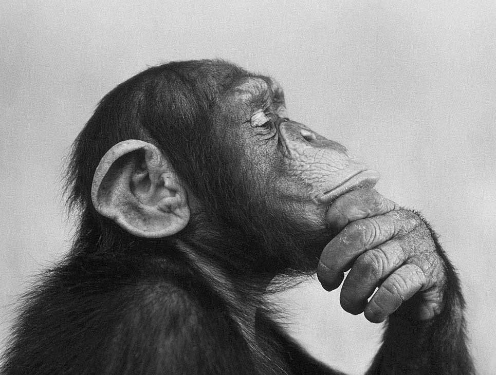 Thoughtful Chimp | Funny Story About Senior Pictures